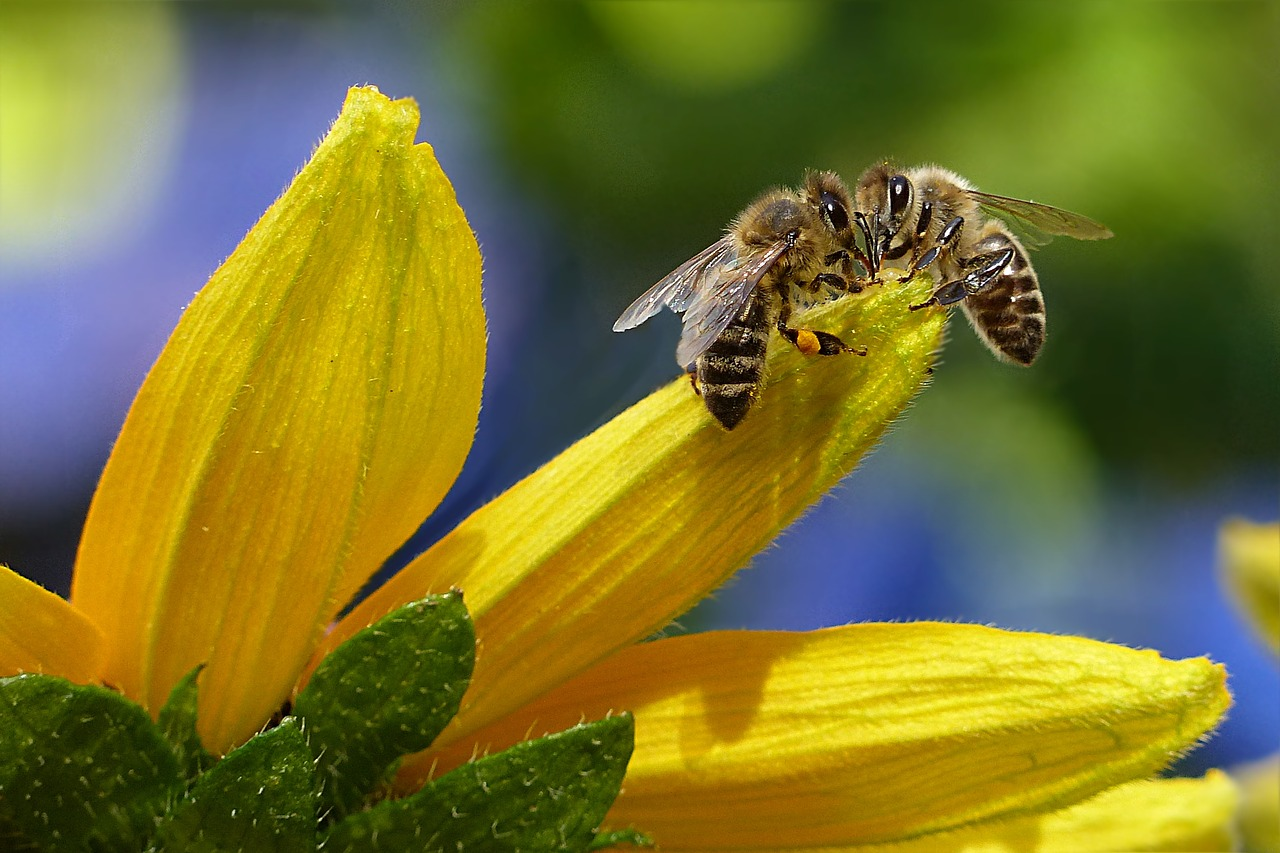 Grüne stellen Anfrage hinsichtlich der Verwendung von Herbiziden